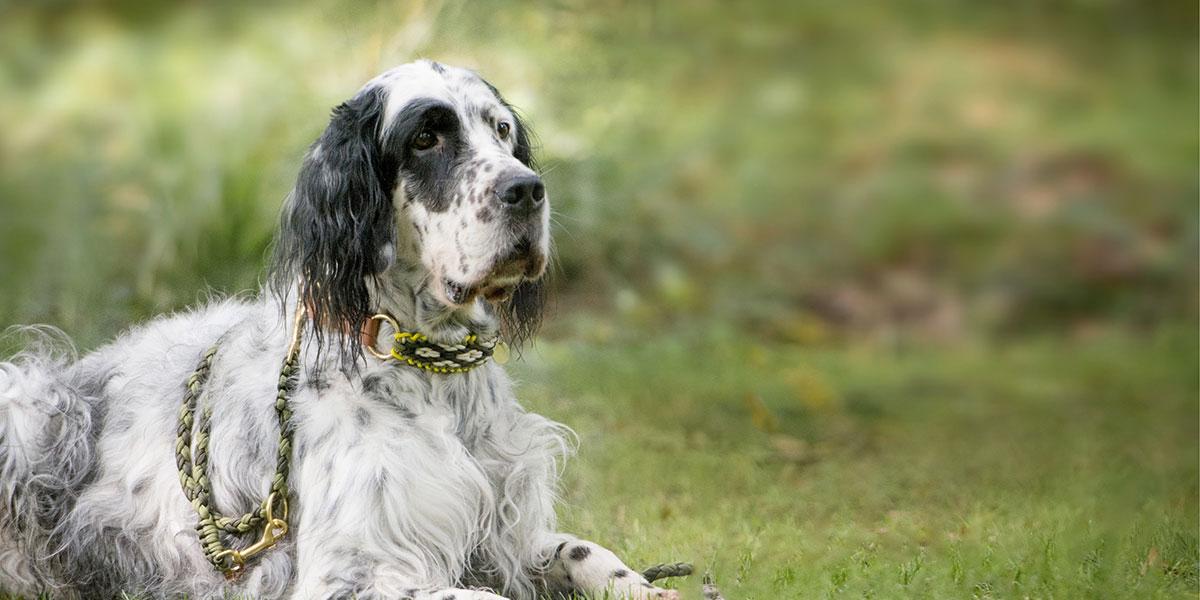 Hund mit handgefertigtem Halsband von Stilhütte Bremen